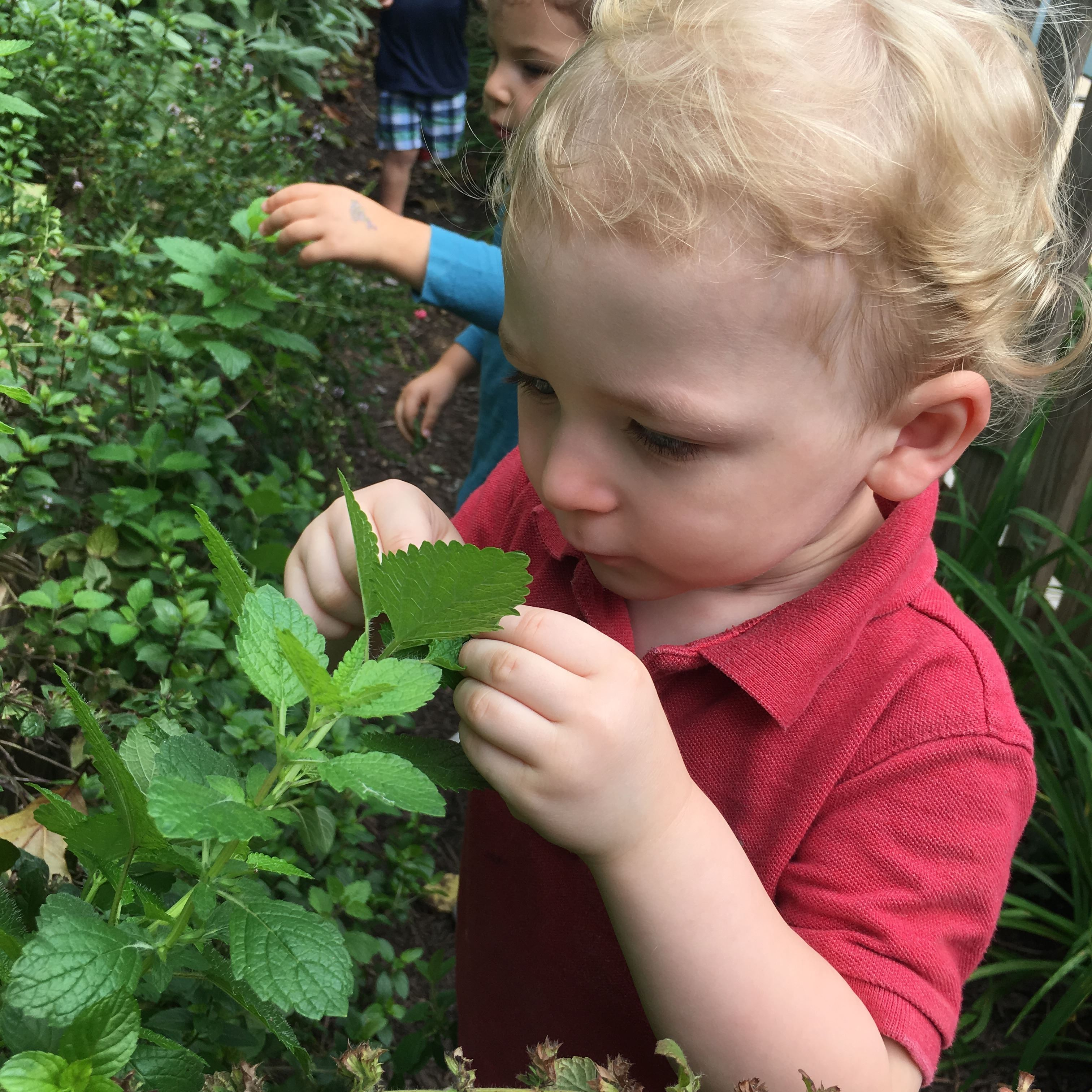 Country Day: Where Nature and Nurture Come Together